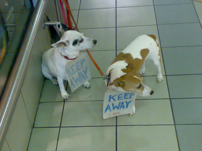 bitey-dogs.jpg